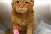 Animals Who Needed Love / Abandoned or abused but doing great now