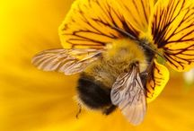 """Save The Bees! / *""""Only after the last tree has been cut down,  Only after the last river has been poisoned,  Only after the last fish has been caught,  Only then will you find money cannot be eaten."""" ~ Cree Prophecy *  / by Laurie Barger"""