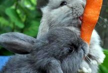 Bunnies /    / by Laurie Barger