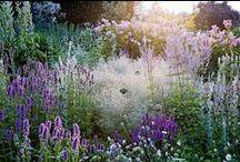 garden inspiration / garden inspiration / by Lisanne Lentink