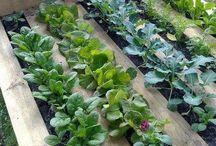 Great Gardening Ideas