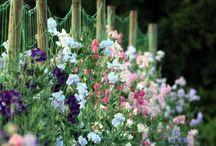 So I Started A Garden / Ideas & tips to grow stuff!!! / by Gail Nakazawa