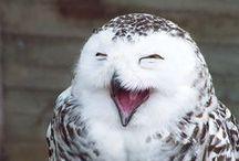 Owl Obsession / by Rita Daniels