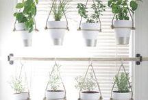 BlumenBalkonFrühling / Mit dem Frühling geht auch das Gestalten des Balkons wieder los. Ich bin begeistert von Urban gardening und dem Garten in der Tasche. Ich hoffe meine selbst angebauten Pflanzen tragen bald Früchte...