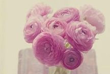 Virtual Garden / Floral inspiration. Pictures of flowers, cut and grown.