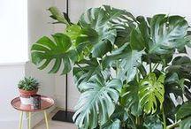 house plant goals