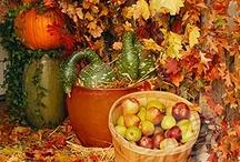 Happy Fall Y'All!! / Everything about my favorite season of the year!!!  / by Rhonda Beckett