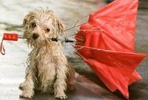 Accessoires Schirme