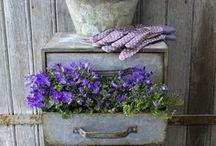gardening / by Mari Cruz