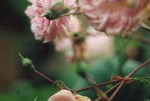 Grün und Rosa