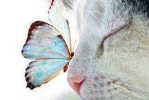 Animal Love / Cute and beautiful animals.