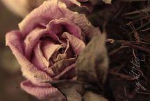 Chocolat et rose