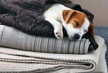 Dog so cute