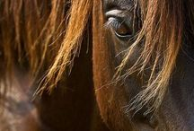 Horses / by Holly Varga