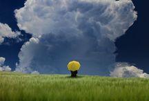 Clouds / by Ingrid Punt