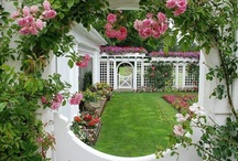 General gardening ideas / by dreamyard