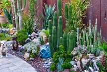 Desert landscaping ideas / Welcome to Dream Yard's pinterest board for desert landscaping ideas. We have lots of desert landscaping pictures, and xeriscape ideas to inspire you with ideas for your own yard. We hope you get to check out some of our other boards and thanks for visiting us.  / by dreamyard