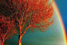 Rainbows / by Holly Varga