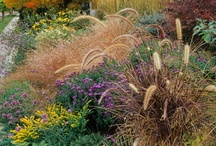 Ornamental grasses and landscape grasses / Welcome to Dream Yard's Pinterest board for grasses. From  ornamental grasses for the garden to lawn's, we have lots of ideas for your yard. We hope you get to check out some of our other landscaping boards and thanks for visiting us.  / by dreamyard