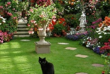 Flower garden pictures  / Welcome to Dream Yard's Pinterest boards. We have lots of inspirational perennial flower garden designs and ideas for your yard. Hopefully you get a chance to check out our other flower and garden boards, and thanks for visiting us. / by dreamyard