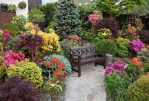 Backyard garden ideas / Welcome to backyard garden ideas where you can find some inspiration for your garden designs. Check out some of our other categorized boards for other great ideas, and thanks for visiting Dream Yard's Pinterest boards.  / by dreamyard