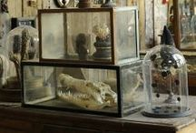 wardian case terrarium / The Wardian case was an early type of sealed protective container for plants, an early version of the terrarium. / by Mehmet Trismegistus