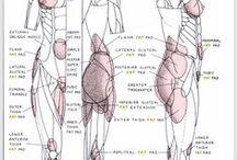 Anatomy + Poses Ref