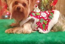 ◇ Bella ◇ / Puppy stuff, dog clothes, dog beds / by Gloria Frazier
