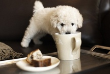 It's a Dog's LIfe. / My little dog; a heartbeat at my feet.  ~Edith Wharton  / by LiveCharmed | DeeAnne White