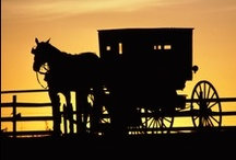 Amish Living / by Sandy Feasby
