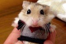 How Cute is THAT?!! / by Lea Kingsbury