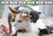 Motherhood. / by Sara K Bostelmann