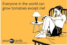 Tomatoes / by Sara K Bostelmann