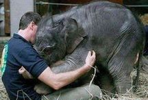 Animals & Pets: Elephants / by Lucia  Kaiser