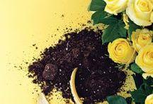Garden - General (composting, irrigation, pests, etc.) / by Kat