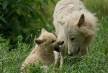 Animals & Pets: Canines/Wolf / by Lucia  Kaiser
