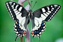 Butterflies / For the love of all things Flutterby!