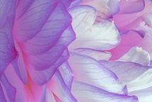 color | inspiration