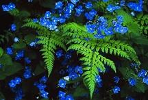 Garden Inspiration / by Lynn Hunt