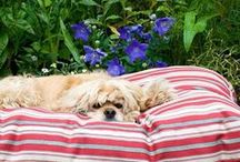 Best of Breed Pet Beds / Pamper your pets with these stylish beds that compliment your home décor. / by FRONTGATE