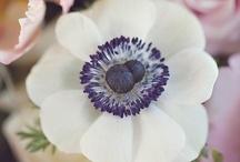 Fleurs et plantes /