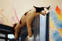 cats sleeping / What else is there?