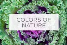 Colors of Nature / Sometimes the best inspiration for your indoor spaces comes from the great outdoors. / by Valspar