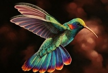 Beautiful and Exotic Birds / by Patricia Burns Chubb