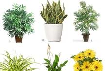 houseplants & plant pics