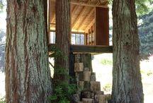 Tree Houses / by Amanda Keane Ayres
