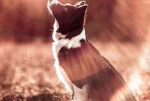 Doggies / Cute and inspiring pictures of dogs and tips about them too!