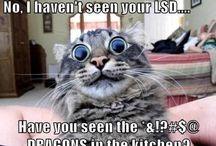 Kitties....Mew