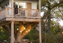 tree houses / by Einat Spector