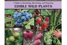 Wild Edibles & Medicinal Herbs